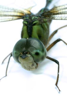 Free Dragonfly Royalty Free Stock Image - 1056846