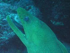 Free Eel Stock Images - 1057394