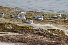 Free Tern Clan Royalty Free Stock Images - 1057399