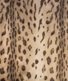 Free Leopard Fur 2 Stock Photo - 1057510