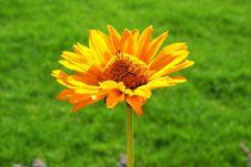 Free Yellow Flower Stock Photo - 1057640