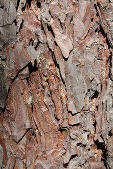 Free Norway Pine Bark Stock Photography - 1058942