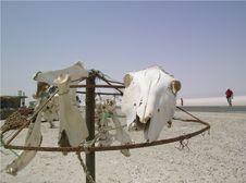 Free Bones Stock Photo - 1059190