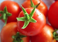 Free Tomatoes Stock Photo - 1059800