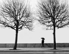 Free Young Man With Umbrella Among Two Trees Royalty Free Stock Photos - 10501408