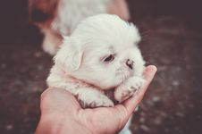 Free Adorable, Animal, Blur, Canine Royalty Free Stock Photography - 105034127