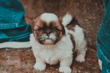 Free Animal, Blur, Canine, Close-up, Stock Images - 105034134