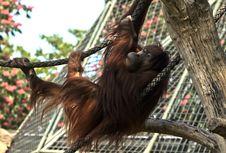 Monkey Time Stock Image
