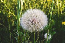 Free Beautiful, Bloom, Blooming, Blossom Royalty Free Stock Photos - 105206008