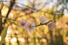 Free Background, Bloom, Blooming Royalty Free Stock Images - 105498819