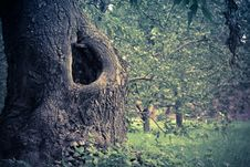 Free Hollow In The Tree Filtered Royalty Free Stock Images - 105577119