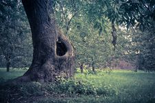Free Hollow In The Tree Filtered Stock Photos - 105577153