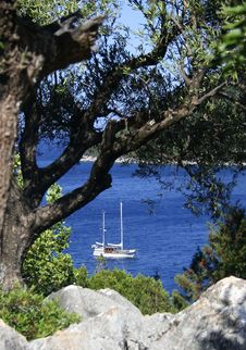 Sailboat Seen Through Tree Leaves Stock Photo