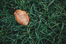 Free High Angle Photography Of Brown Leaf On Grass Stock Image - 105608481
