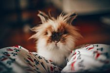 Free White And Brown Long-chaired Cat Focus Photography Royalty Free Stock Image - 105608586