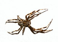 Free Brown Spider Cut-out Royalty Free Stock Photography - 10572477