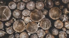 Free Bunch Of Wood Stumps Stock Photos - 105823973