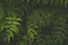 Free Green Leaves Stock Photos - 105911673