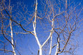 Free A Tangle Of Branches Royalty Free Stock Photos - 1060048