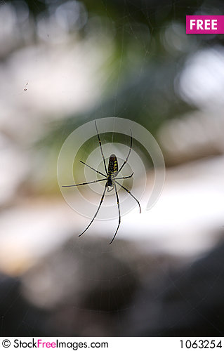 Free Asian Spider Stock Images - 1063254