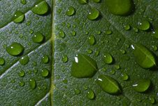 Free Leaf And Rain Drops Royalty Free Stock Photo - 1060885