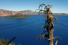Free Crater Lake, Dead Tree Stock Photo - 1061080