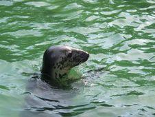 Free Aquatic Royalty Free Stock Photography - 1061317