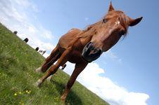 Free Wild Horses Stock Photo - 1062240