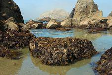 Free Seaweed Rock Stock Images - 1063574