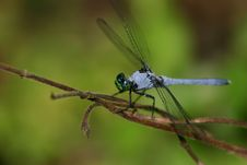 Free Dragonfly Stock Images - 1065024