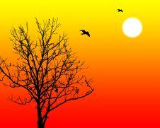 Free Sunrise Stock Image - 1065771