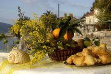 Free Mimosa 11 Stock Image - 1065831