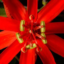 Free Red Flower Stock Image - 1066121