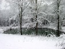 Free Winter Woods Royalty Free Stock Photography - 1066517