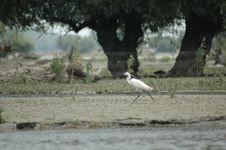 Free Bird Royalty Free Stock Photography - 1067017
