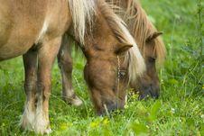 Free Ponys Stock Images - 1068084