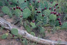 Free Desert Cactus Stock Image - 1068461