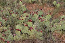 Cactus Desert Stock Photos