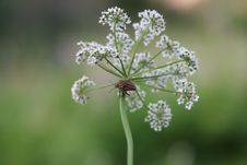The Bug On A Flower - 2 Stock Image