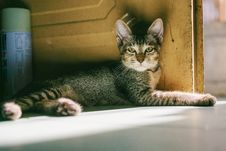 Free Grey Tabby Cat Lying Beside Brown Wooden Door At Daytime Royalty Free Stock Image - 106006146