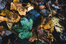 Free Assorted Color Leafs Photo Royalty Free Stock Photos - 106058618