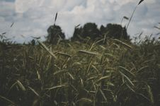 Free Selective Focus Photography Of Green Grass Under White Sky Stock Image - 106058681