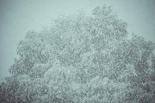 Free Trees In Snowfall Retro Stock Photo - 106068430