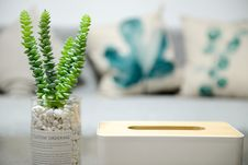 Free Selective Photo Of Green Succulent Plant Royalty Free Stock Photos - 106174118