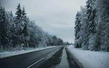 Free Gray Pave Road Between Tall Trees Covered On Snow Stock Photo - 106306350
