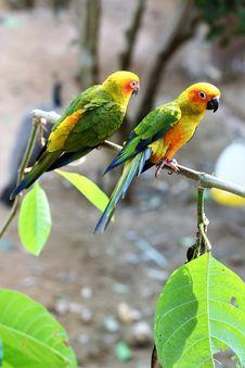 Free Bird, Parrot, Parakeet, Beak Stock Photo - 106388770