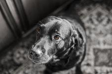 Free Dog, Black, Black And White, Dog Like Mammal Stock Photo - 106388980