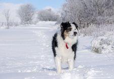 Free Dog, Dog Like Mammal, Dog Breed, Snow Royalty Free Stock Photos - 106388988