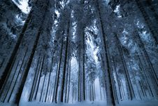 Free Nature, Winter, Tree, Forest Stock Image - 106389231