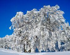 Free Winter, Snow, Blue, Tree Stock Image - 106389841